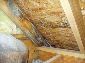 Mississauga Attic Mold Removal