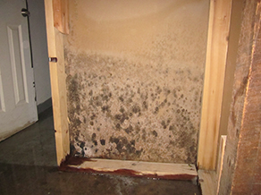 Mississauga Attic Mold Removal Mississauga Basement Mold Removal