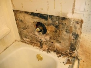Mold Removal Company Serving Mississauga GTA - Removing mold from bathroom walls and ceiling