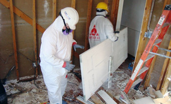 Mississauga Mold Removal Technicians